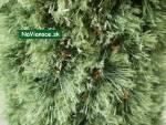 vianočný stromček kužeľový