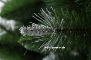 borovica vianočný stromček