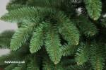 Smrek sibírsky, vianočný stromček.