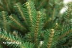 vianočný stromček smrek prírodný