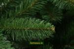 smrek sibírsky vianočný stromček