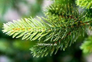 TUJA úzky vianočný stromček z 3d ihličia